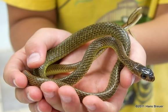 chinese art snake - photo #42