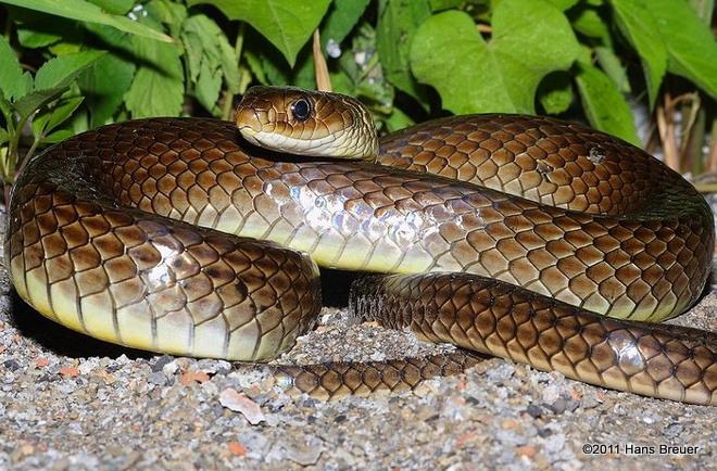 chinese art snake - photo #3