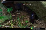 Sunbeam Snake Xenopeltis unicolor digging into earth