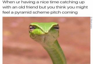 skeptical snake pyramid scheme bangkokherps jonathan hakim
