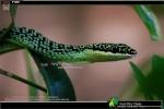 Golden-Tree-Snake