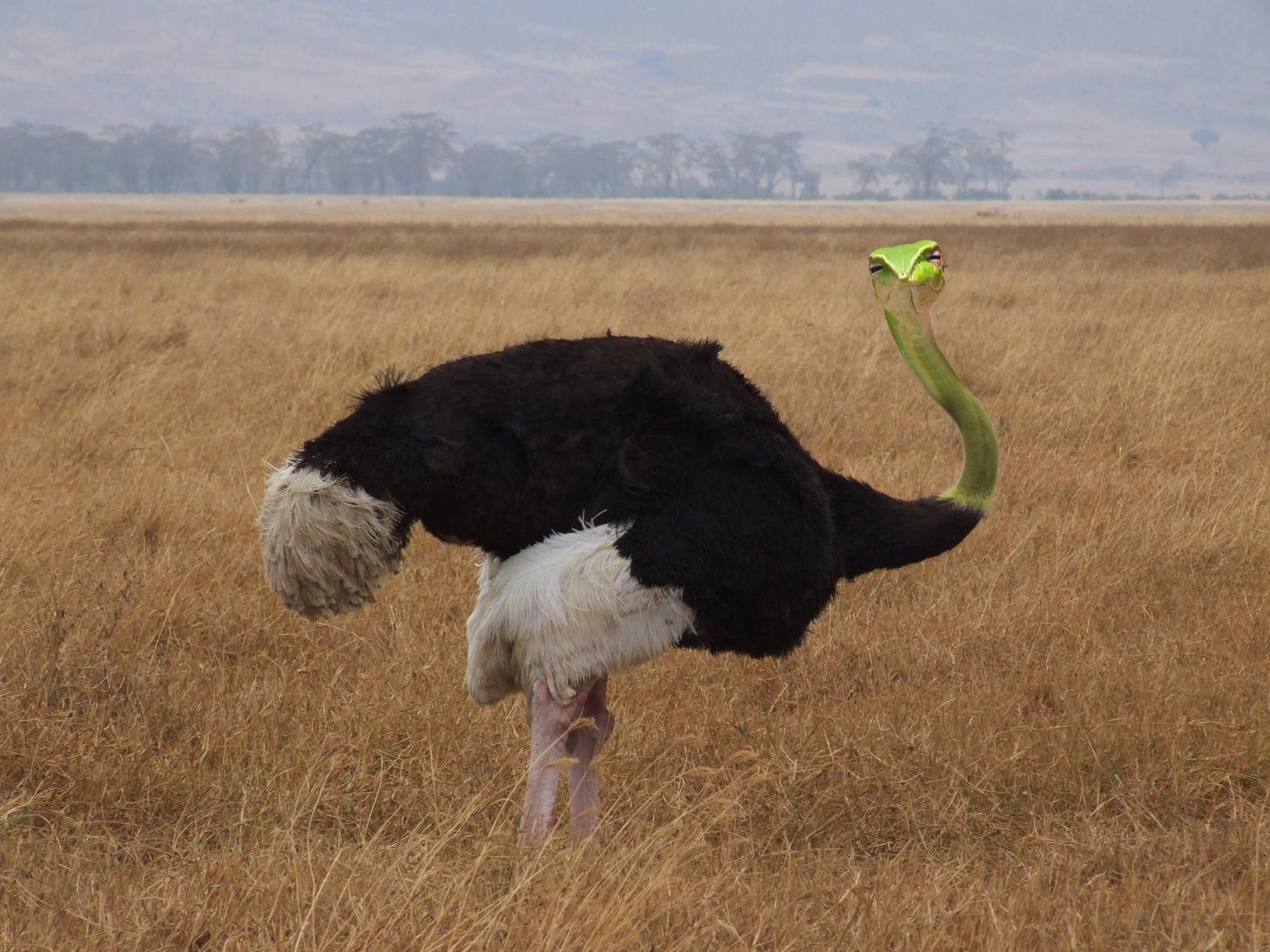 skeptical snake ostrich bangkokherps jonathan hakim