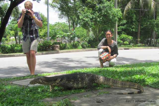 Asian water monitor Varanus salvator bangkok thailand lumpani park