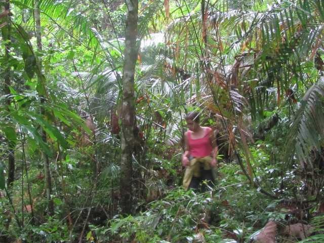 rose hakim in the khao yai jungle