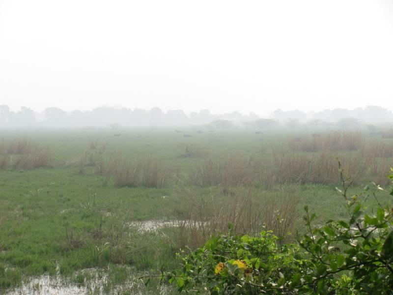 Bharatpur Keoladeo National Park