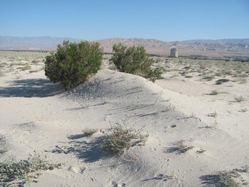 coachella valley fringe-toed lizard habitat in palm desert