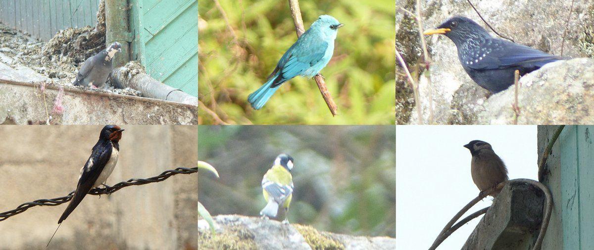 House Sparrow, Green-backed Tit, Blue Whistling Thrush, Verditer Flycatcher, Barn Swallow, Rock Dove