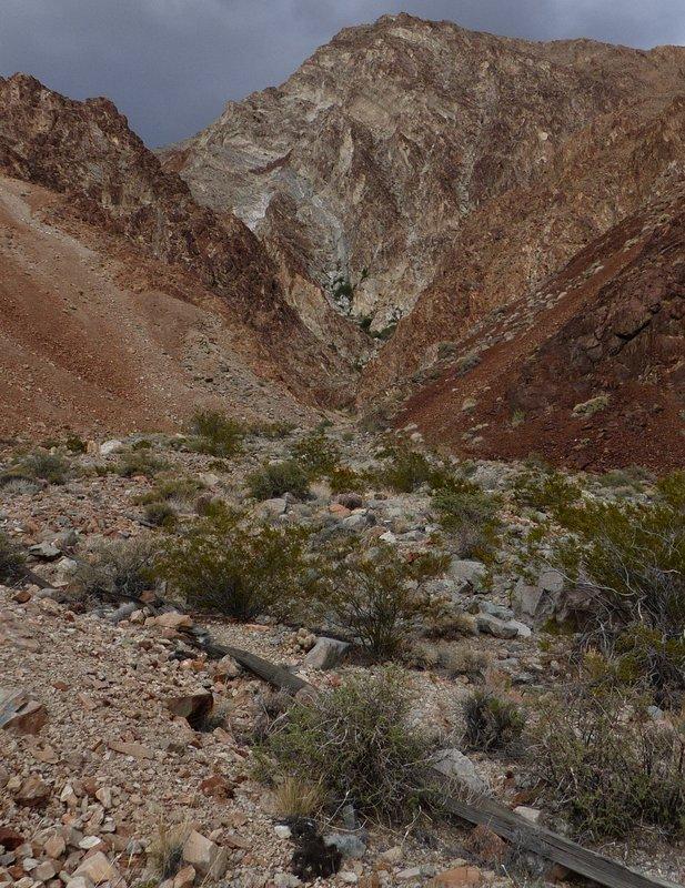 desert wash inyo slender salamander habitat
