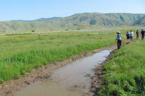 sampling for western spadefoot in tejon ranch