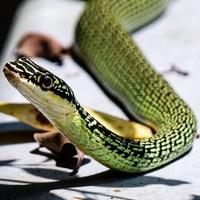 identifying snakes in bangkok